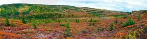 Alaskan tundra near Wonder Lake in Denali National Park